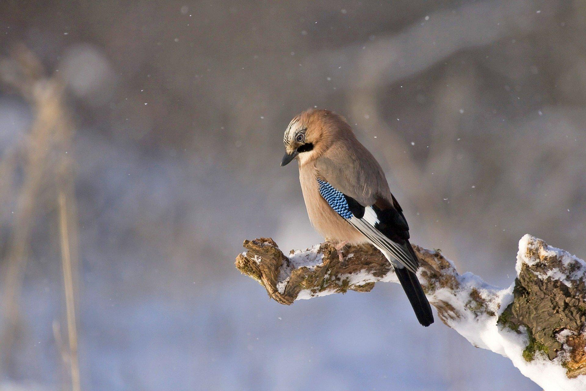 Feeding Birds Through The Winter?