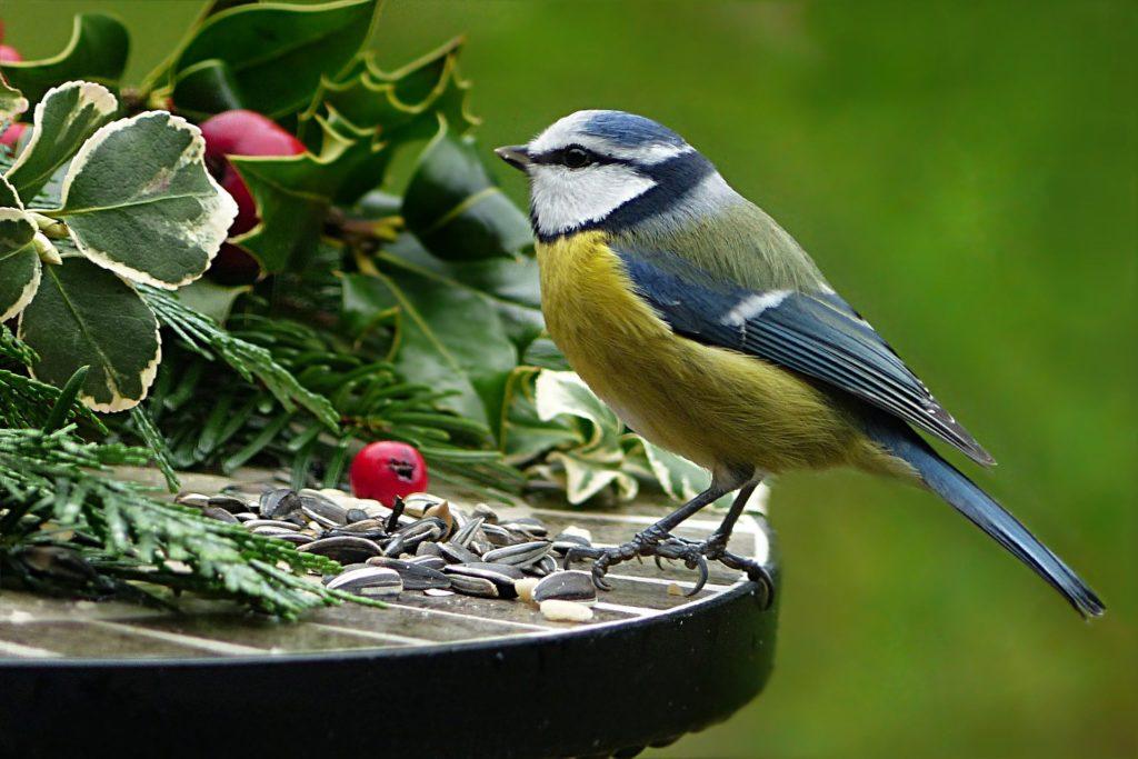 Nature 3080542 1920 1024x683, Best Garden, Home And DIY Tips