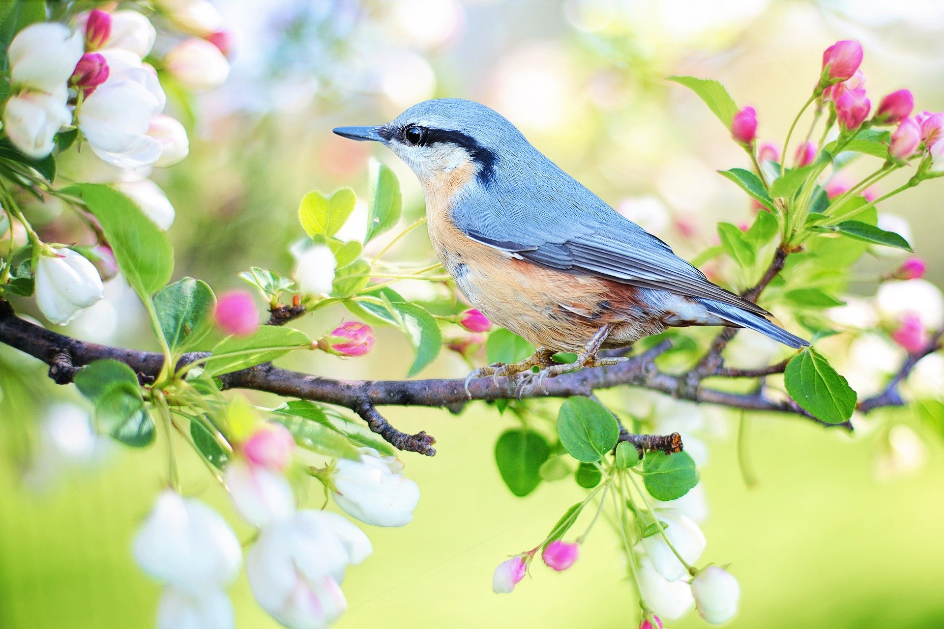 , These Shrubs Should Be In Your Yard If You Are A Bird Lover, Best Garden, Home And DIY Tips