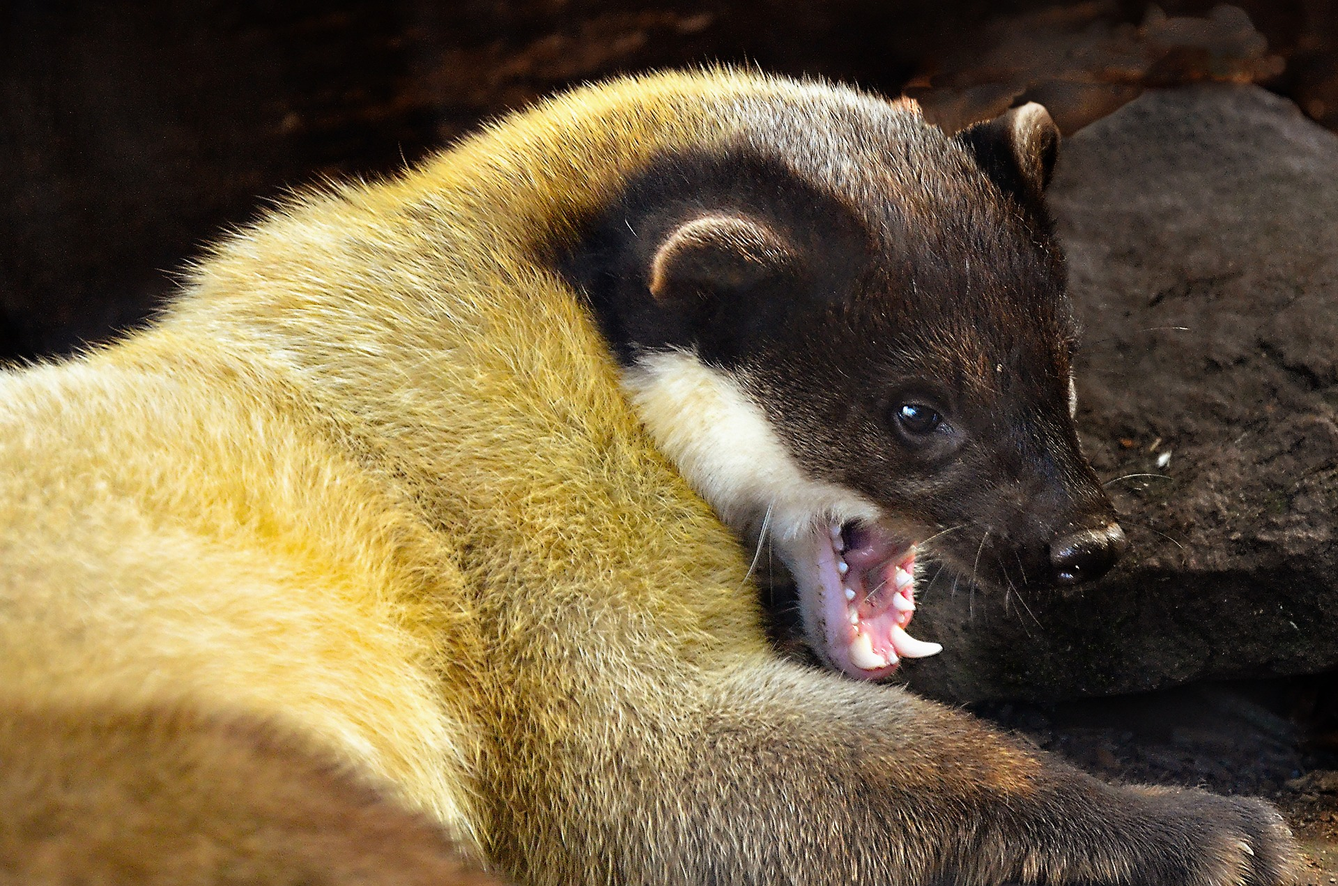 , Get rid of martens on the roof, Best Garden, Home And DIY Tips